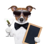 Cool Dog with Sunglasses, Drink and Bowtie