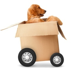 Dog in movingbox